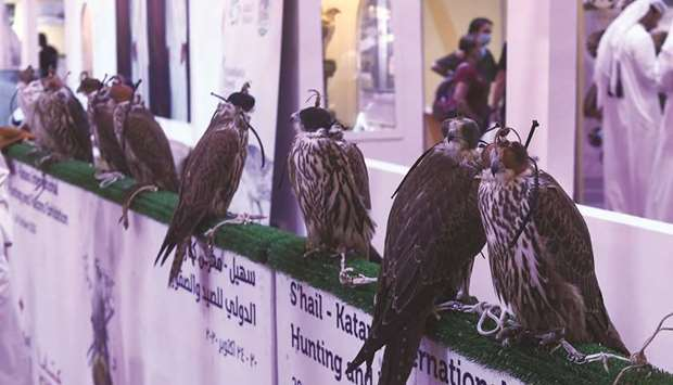 Falcons on display are a major attraction at the exhibition. PICTURE: Shemeer Rasheed.