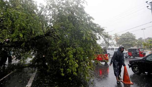 A man places a cone near a tree that fell down due to bad weather in Colombo