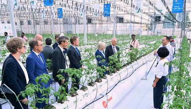 Water saving greenhouse pilot project at Hassad's farm in Al Sheehaniya