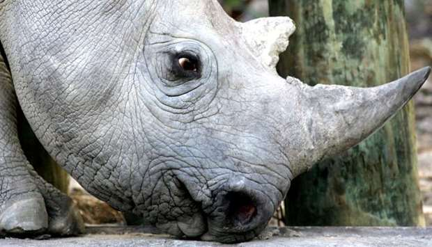 A 33 month old black rhino is seen at a game reserve near Cape Town, South Africa, January 8, 2005