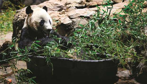 Bei Bei ... heading 'home' to China.