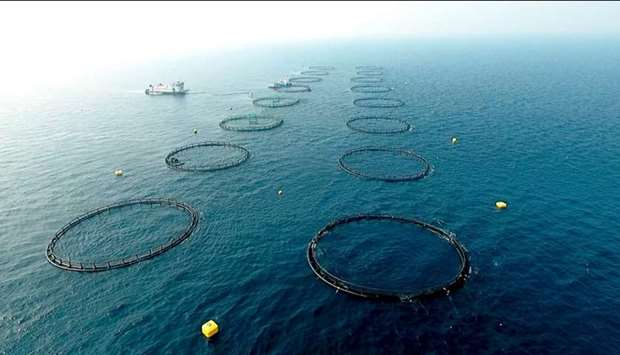 Samkna fish farm is located 50km away from the coast in the Qatari waters, northeast of the Ruwais r