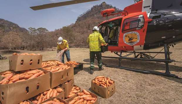 NSW's National Parks and Wildlife Service staff prepare to air-drop sweet potatoes and carrots for a