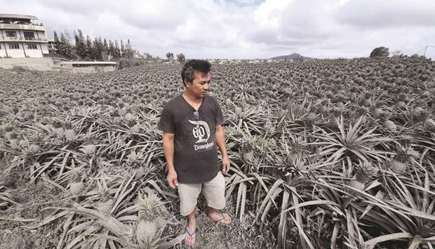 Farmer Jack Imperial, 49, poses for a portrait in his pineapple plantation covered with ash from the