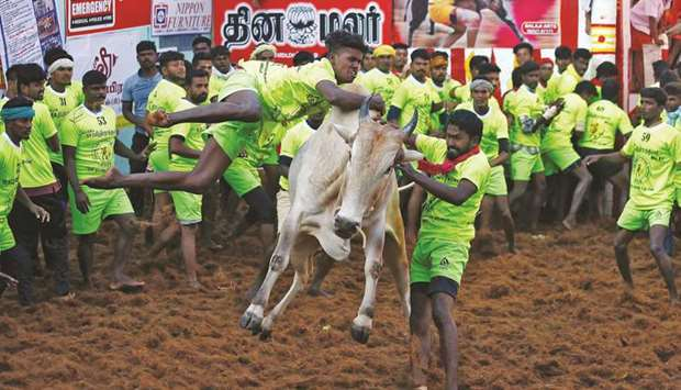 Villagers try to control a bull during a bull-taming festival, part of Tamil Nadu's harvest festival