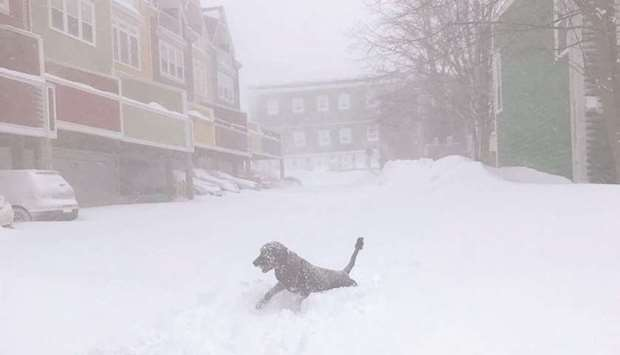 A dog runs in the snow during a blizzard in St John's, Newfoundland and Labrador, Canada in this ima