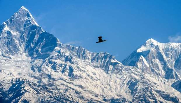 A great cormorant flies against the backdrop of the Mount Machhapuchhre (L) and Annapurna mountain r