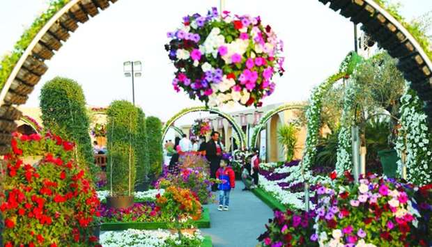 A wide variety of flowers and ornamental plants are available at Mahaseel Festival.