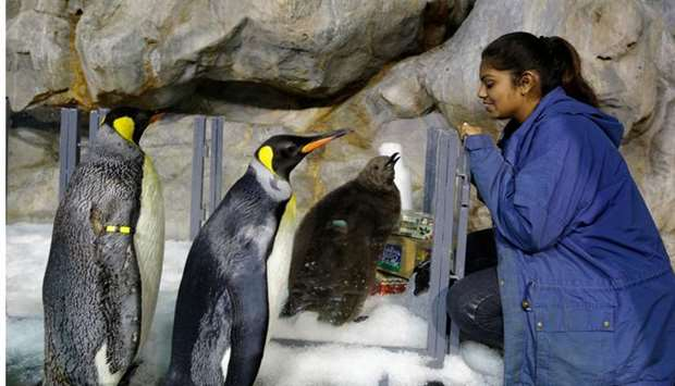Junior avian keeper Benazir Begum looking at Maru (3rd-L) being prepared to join others the park
