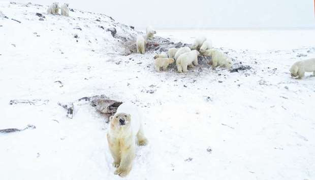 This handout photo taken on December 3 and released by the World Wildlife Fund – Russia (WWF-Russia)