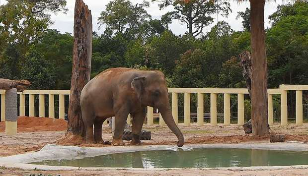 Newly arrived Asian elephant Kaavan drinks water in his new enclosure at the Kulen Prom Tep Wildlife