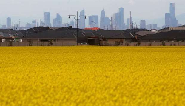 Canola field is seen near a new housing estate in outer Melbourne
