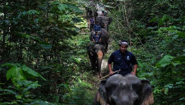 Malaysian mahouts riding rescued elephants through a forest as part of a patrolling exercise at the