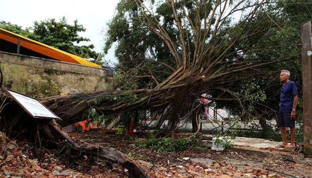 A fallen tree is seen after heavy rains in Barra da Tijuca neighborhood in Rio de Janeiro, Brazil