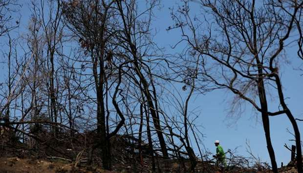 A worker from the Department of Environment, Land, Water and Planning works in a bushfire affected a