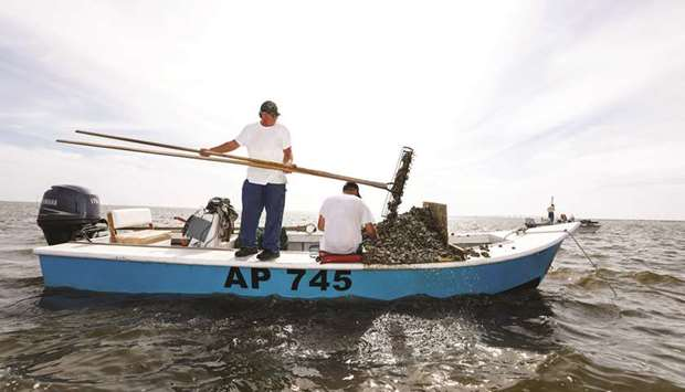Michael Dasher, Sr, uses tongs to lift oysters from the bottom of Apalachicola Bay onto the boat of