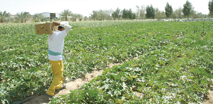 A worker harvests one of the crops.