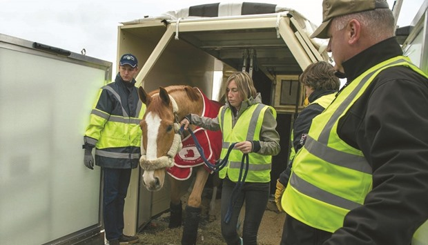 QA Cargo transports horses for FEI World Cup Finals