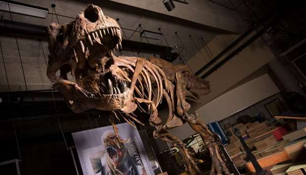 "The skeleton of the Tyrannosaurus rex ""Scotty"" at the T.rex Discovery Centre in Eastend, Canada."
