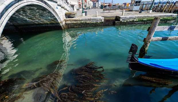 Seaweed can be seen in clear waters in one of Venice's canals.