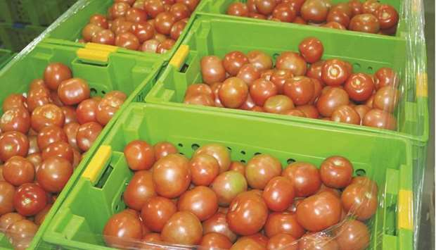 Mahaseel receives fresh vegetables and then grades the products following the technical specificatio