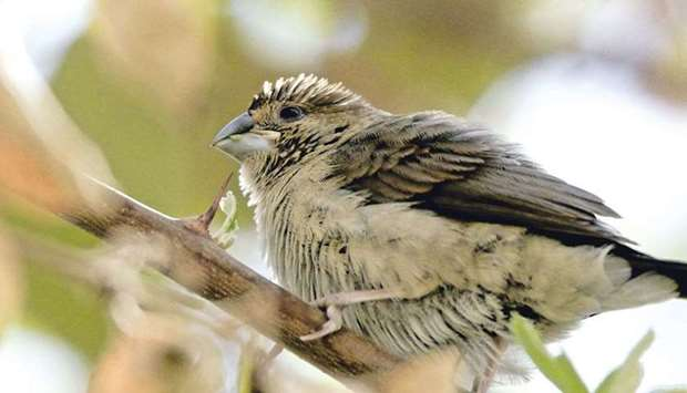Birds spotted in Qatar this winter