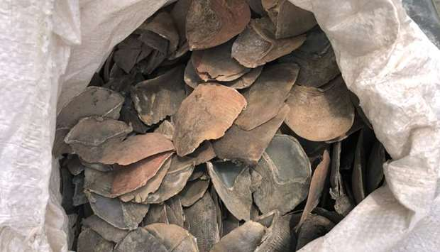 A confiscated sack of pangolin scales in a holding area in Singapore