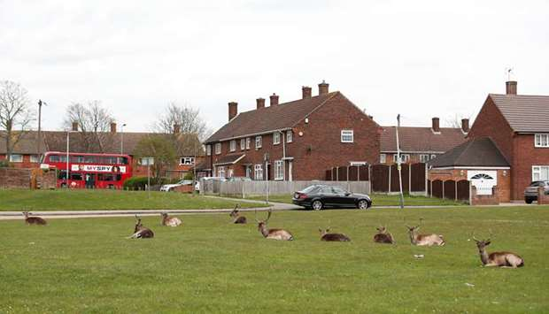 A herd of deer are seen at the Harold Hill housing estate in Romford as the spread of the coronaviru