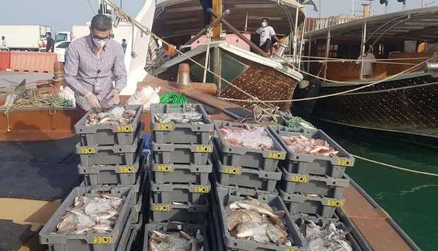 Inspection of fish at harbours