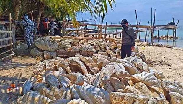 Coast guard personnel inspecting seized giant clam shells, weighing a total of 200 tonnes and worth