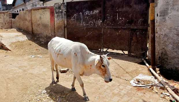 A cow walks past a closed slaughter house in Allahabad