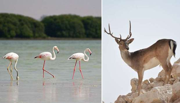 Qatar marks International Day for Biological Diversity