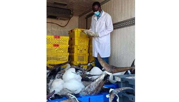 An inspector examines a consignment of fish