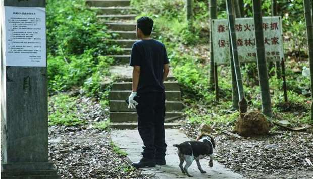 A rescuer leading a dog as he searches leopards which escaped from a wild park in Hangzhou, in China