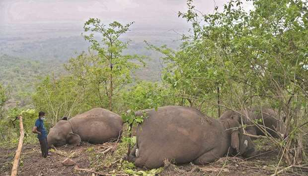 A man stands near dead wild elephants, suspected to have been killed by lightning, on a hillside in