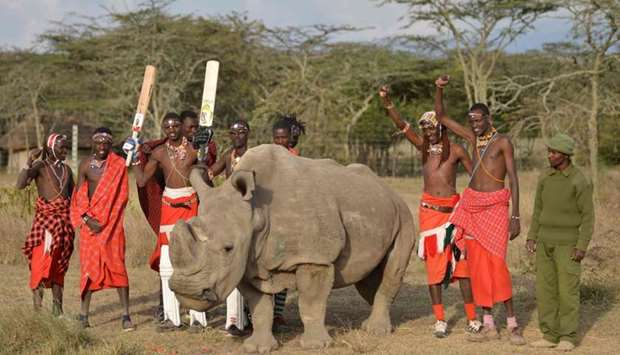 Maasai warriors pose with Sudan, the only male of the last three northern white rhino sub-species on