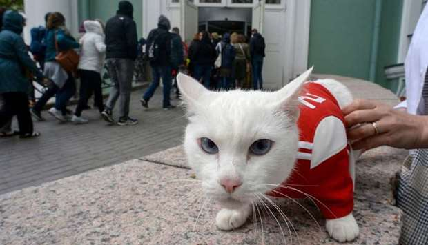 Achilles the cat, one of the State Hermitage Museum mice hunters, is pictured outside the museum in