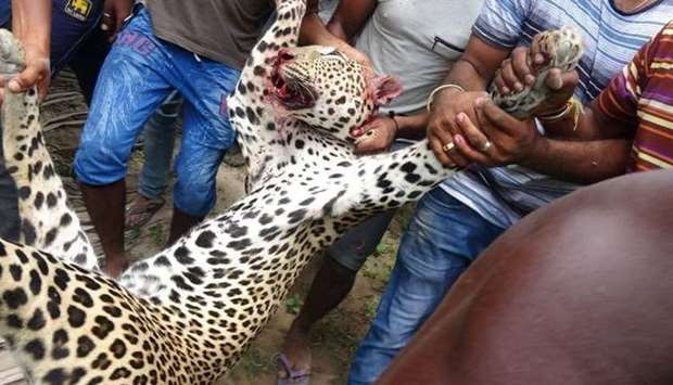 Lanka - killed leopard