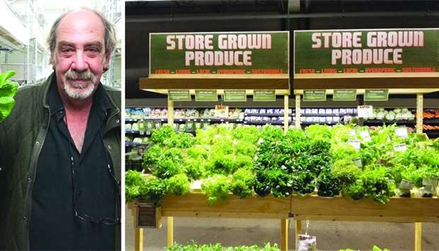 Glenn Behrman; Some of the leafy vegetables produced through indoor farming