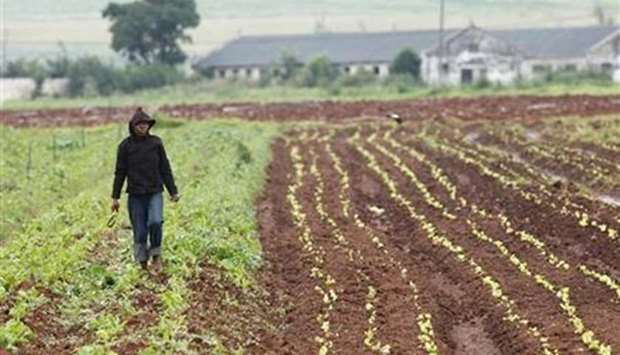 The world now has a unique opportunity to encourage farmers to produce a wider range of food.