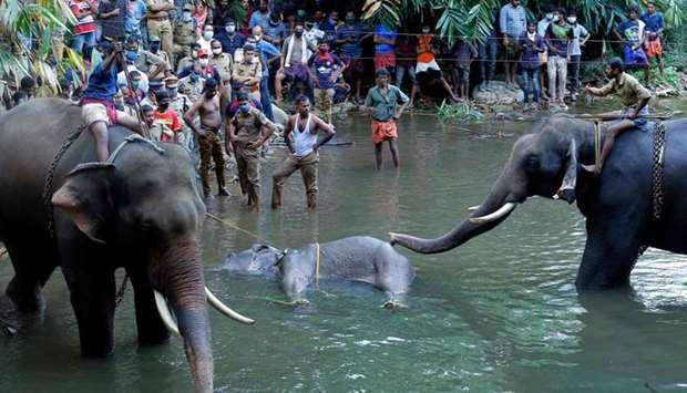 Onlookers standing on the banks of the Velliyar River in Kerala as a dead wild elephant (C) is retri