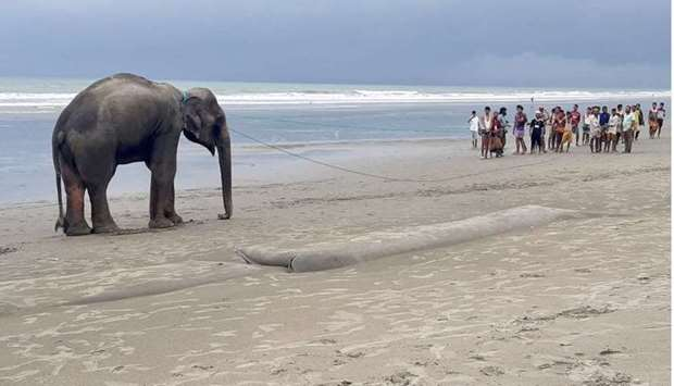 Villagers gather at a beach to lead a wild Asian elephant yesterday, believed to have entered Bangla