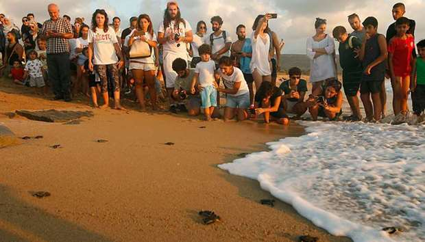 Orange House project releasing new born turtles on the shore in El Mansouri, southern Lebanon