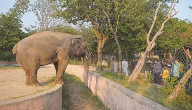 Media representatives take video and photographs of Elephant Kaavan as it stands behind a fence at t