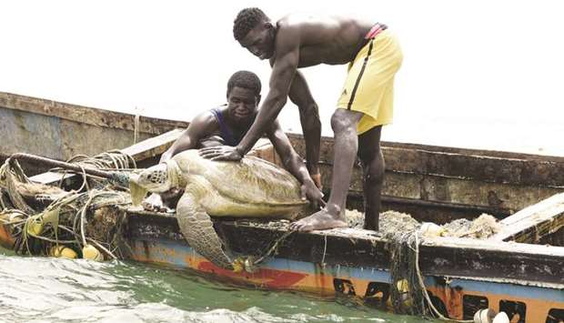 Senegalese fishermen release a sea turtle back into the sea after rescuing it from their fishing net