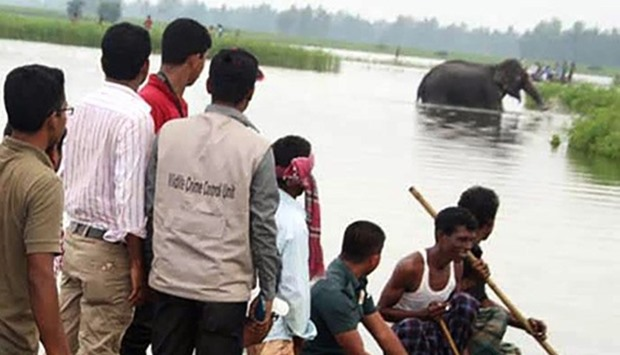 Bangladesh wildlife officials look at the wild elephant washed across the border