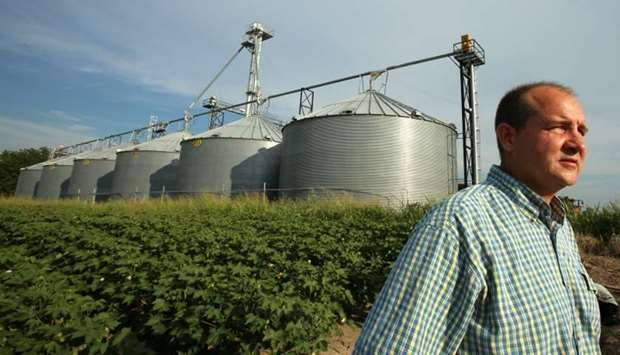 John Weiss looks over his damaged crop on his farm in Dell