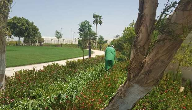 Plants being maintained at a garden in Al Sheehaniya Municipality.
