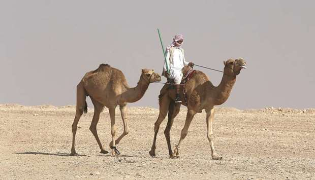 A man rides a camel at the Tharb camel hospital in the Qatari desert.