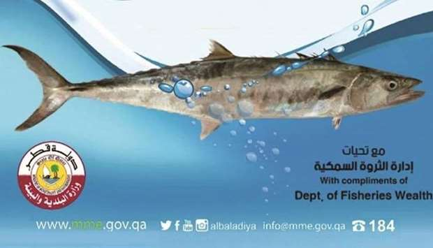 One-month ban on fishing kingfish from Saturday